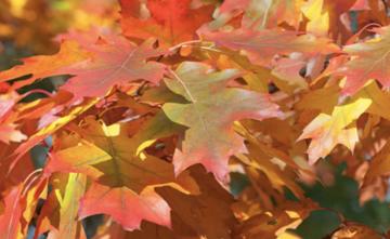 Herbstferien_Blätter
